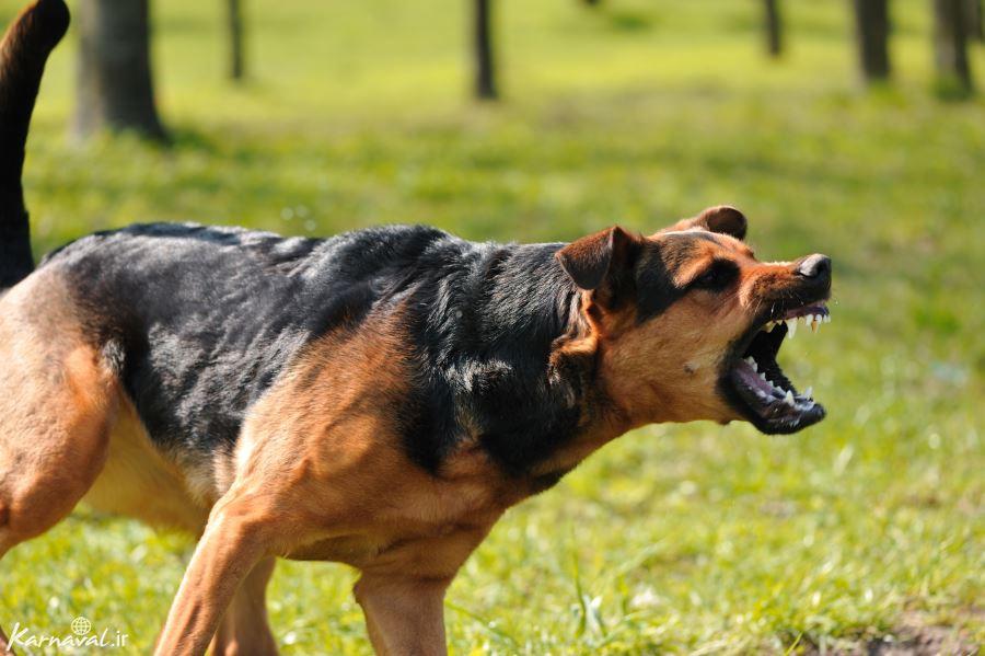 سگ و حیوان سال