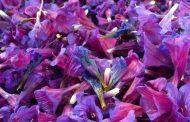 فواید گل گاوزبان( نحوه مصرف)