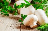 خواص قارچ چیست؟