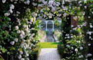 بهترین گل های خوشبو برای سال 98
